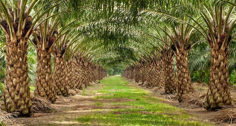 palm oil bioplastics 1 810x433 - The Goodness in Palm Oil