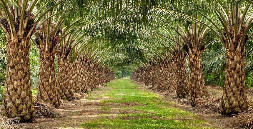 palm oil bioplastics 1 860x439 - The Goodness in Palm Oil